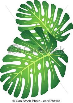 Illustration of Leaf tropical plant - Monstera. vector art, clipart and stock vectors. Tropical Leaves, Tropical Flowers, Tropical Plants, Paper Leaves, Paper Flowers, Plant Monster, Leaf Stencil, Stencils, Leaf Clipart