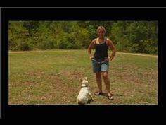 Dog Training : How to Train Your Dog to Come When Called... sldo s bunch of different games that will help with this: hide and seek, catch me if you can
