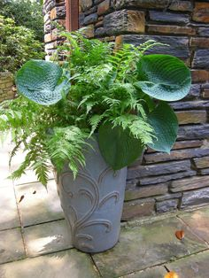 Fern & Hosta Container Planter
