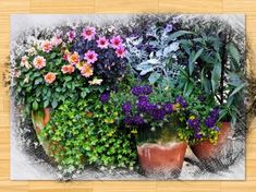 Container gardens are a great idea if you don't have the space for a traditional garden. Placing plants in the same container can make attractive arrangement in a container garden. Potted Plants Full Sun, Potted Plants Patio, Plant Pots, Plants Indoor, Hanging Plants, Container Flowers, Container Plants, Container Gardening, Gardening For Beginners