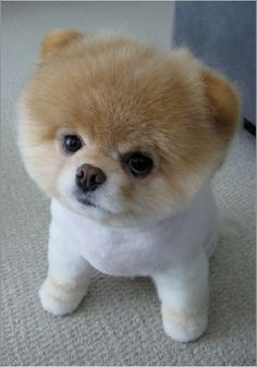 ahhh i want to put this little man in my purse #cutiepie