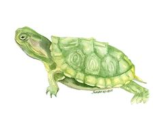 Green Turtle watercolor giclée reproduction. Landscape/horizontal orientation. Printed on fine art paper using archival pigment inks. This quality printing allows over 100 years of vivid color in a ty