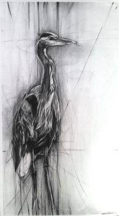 Blue Heron by April Coppini charcoal?