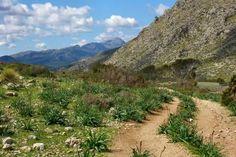 #Walking paths through the #mountains #Mallorca