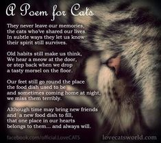 A Poem for Cats who have gone on to the Rainbow Bridge Cat Quotes, Animal Quotes, Animal Poems, Crazy Cat Lady, Crazy Cats, I Love Cats, Cute Cats, Cat Poems, Cat Loss Poems