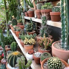Nice combination of desert plants - House Plants Succulent Arrangements, Cacti And Succulents, Planting Succulents, Planting Flowers, Deco Cactus, Cactus Decor, Cactus Flower, Indoor Garden, Garden Plants