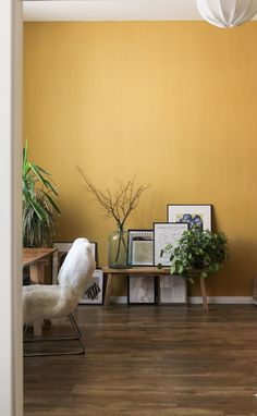 The right accent wall color, paired with the right furniture arrangements and some nice wall art will make your home decor stand out and leave a lasting impression on all your guests. Here's our list of top accent wall colors to choose from. Feng Shui, Pose Parquet, Home Interior, Interior Design, Accent Wall Colors, Accent Walls, Wit And Delight, Diy Home, Home Decor