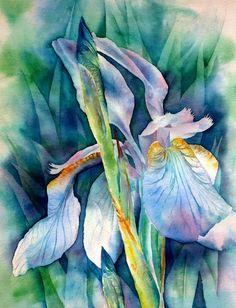 Thomas Habermann - Siberian Iris