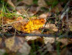 Autumn is coming - Syksy tuloillaan by Pauliina Kuikka