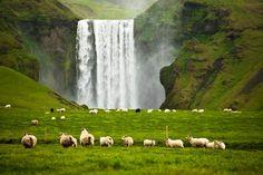 Sheepish Waterfalls :)