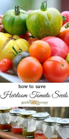 How to Save Heirloom Tomato Seeds (it's a thing...)