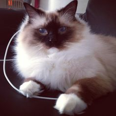 Cutie Pie Seal Mitted from Be My Cupcake on Tumblr