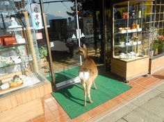 Deer Invade the City of Nara - | Intellihub.com