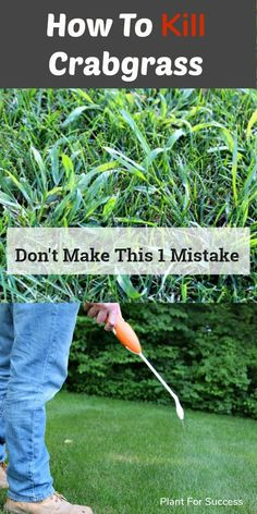 garden care schedule garden care schedule Crabgrass removal and prevention is an . garden care schedule garden care schedule Crabgrass removal and prevention is an . Crabgrass Removal, Lawn Fertilizer, Garden Maintenance, Lawn And Garden, Yard Care, Lawn Care Business, Lawn Edging, Crab Grass, Garden Care