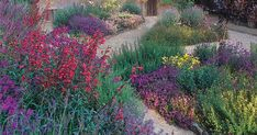 Great SoCal plant ideas + tips for bees and hummingbirds!   9 Plants That'll Make Your Southern California Garden Flourish via @PureWow