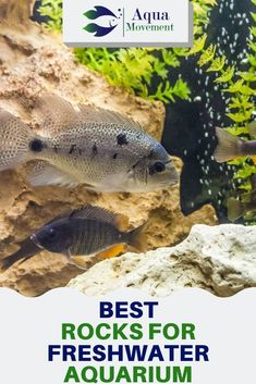 Rockwork is one of the decorating options for aquarists. In this article we go over the things you need to know when choosing the best rocks for freshwater aquarium. Aquarium Setup, Diy Aquarium, Aquarium Design, Aquarium Fish Tank, Planted Aquarium, Aquarium Ideas, Saltwater Fish Tanks, Saltwater Aquarium, Freshwater Aquarium Plants