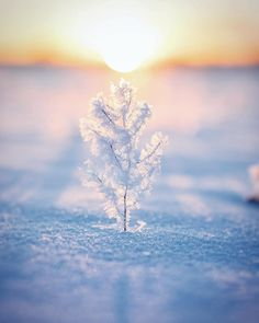 """EARTHOFFICIAL (@earthofficial) on Instagram: """"Ice art ❄️   Photography by © Ville Pääkkönen (@villepaakkonen) #earthofficial"""""""