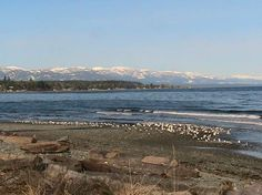 Qualicum Beach, Vancouver Island. It's on my top five places to visit~