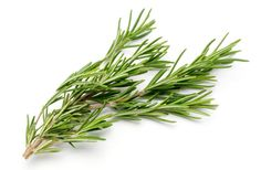 Top Health Benefits Of Rosemary Herb. Have you heard about rosemary? It was brought to India during the colonial period by the Europeans. Salvia, Herbal Remedies, Natural Remedies, Rosemary Herb, Modern Wedding Flowers, Healing Herbs, Medicinal Herbs, Health Benefits, Helpful Hints