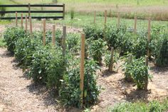 When those tomatoes and peppers are finished for the year - its time to get them out of the garden.