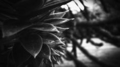 (awe)some random black and white photo.