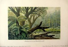 1900 Antique amazing Archegosaurus print by LyraNebulaPrints, $45.00