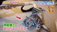トコトン掘り下げ隊!生き物にサンキュー!!すごくかわいい子猫 #4! 2017年8月16日