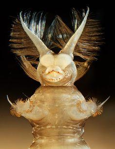 Magnified Maggot