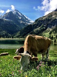 Kitsch am Lauenensee. Kitsch, Mountains, Nature, Travel, Animals, Animales, Naturaleza, Trips, Animaux
