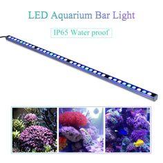 Aquarium Reef Fish