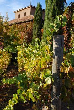 Viansa Winery, Sonoma, CA