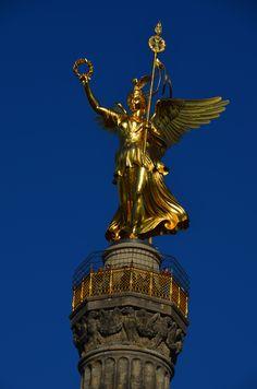 Goldelse - blauer Himmel, nicht bearbeitet - Mrz 2014