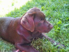 lovely puppy Emma