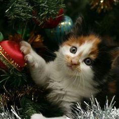 Kerstmis