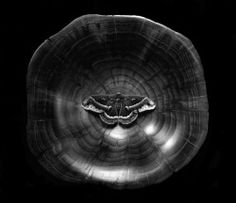 Moth In Wood Bowl, Cushing, Maine, c. 2006  By: PAUL CAPONIGRO