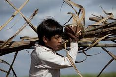 Child labour in Bolivia - Part 2 - German helps his family harvest sugar cane after attending school in the mornings. Children as young as 6 work in the sugar cane and mining industries, two of the harshest jobs in the country. An estimated 380,000 Bolivian children work. But in the sugar cane harvesting industry, child labourers now number less than 1,000 thanks to a UNICEF-supported initiative to provide communities with schools and other support. © UNICEF/NYHQ2011-1444/Friedman-Rudovsky