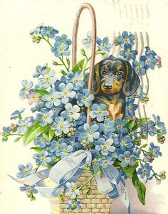 Black and Brown Dachshund in Basket of by TheOldBarnDoor on Etsy
