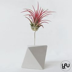 MARTURII plante aeriene in suport turnat GEOMETRIC - M17 - https://www.yau.ro/collections/marturii-nunta-si-botez?page=1 - yauconcept - elenatoader