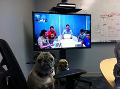 Pug Meeting Pug Love, Pugs, Wall, Pug, Pug Dogs