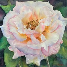 An original watercolor painting by Hawaii artist Colleen Sanchez, Painted from a public rose garden in Hawaii. Roses are so wonderful to paint in watercolor, helps achieve the translucency of the light through petals. Seascape Paintings, Watercolor Paintings, Watercolors, Original Art, Original Paintings, Watercolor Pictures, In The Tree, Floral Watercolor, Photos