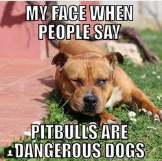 Other Person: OMG, does that person over there have a pitbull! Who brings such an aggresive thing to the dog park! come on lets go Me: *Uhem* Other Person looks over to see 2 pitbulls sitting on the seat next to Me: Uh, see u.