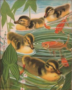 George Trimmer - Ducks, ducklings swim around the goldfish, 1943 Christmas Cover, Goldfish, Selling On Ebay, Vintage Prints, Ducks, Koi, Baby Boy, Swimming, Illustrations