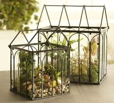 I love these mini greenhouse terrariums - pretty indoors and on the patio