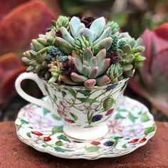 Happy Friday ❤️ • • • • • #succulove #color #succulents #cactus #suculentas #life #floral #winter #friday #craftsposure #greenthumb #southbay #classic #etsy #california #handmade #berries #community #vintage #2018 #wedding #gardening #flowers #nature #plants #girly #plantas #Godscreation #joy #tea