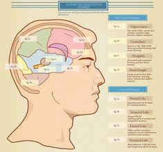 NLP  - How the Brain Retains Information Infographic PNL - Il cervello
