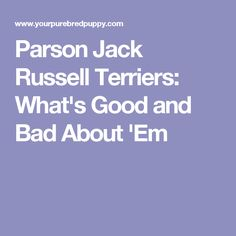 Parson Jack Russell Terriers: What's Good and Bad About 'Em