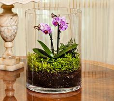 NEW! Mini Moth Orchid Terrarium - White Flower Farm