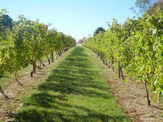 Made in BaltCo: Basignani Winery