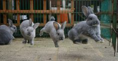 Bunny bounds are called binkies.  - (?) True? I don't know - but I hope so because they should be :)