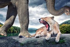 Un rinoceronte volante, un cammello che si gode la pausa fumando una sigaretta, un ippopotamo che sputa bolle di sapone. Madre Natura non ha Photoshop, ma il fotografo svizzero John Wilhem sì. Manipola digitalmente i suoi scatti e, con un po' di fantasia, gli animali diventano surreali opere